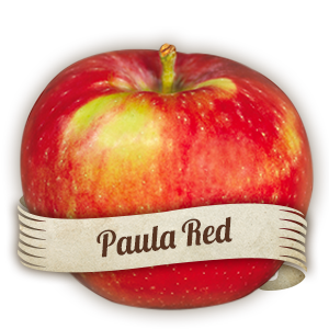 Paula Red